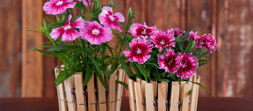 As melhores flores para vasos pequenos!