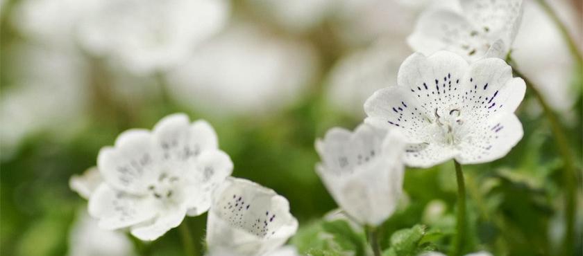 Flores de Março